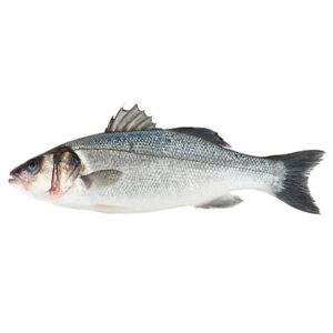 Див Лаврак от Balkan Fish 1 кг+