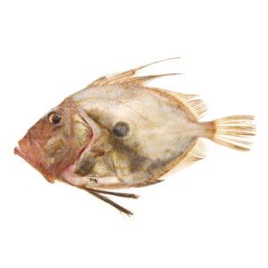 Джон Дори от Balkan Fish 1кг