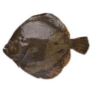 Пресен Калкан от Balkan Fish 1кг