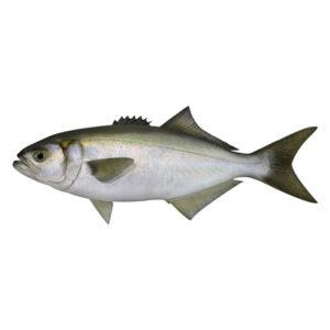 Пресен Лефер от Balkan Fish 1кг