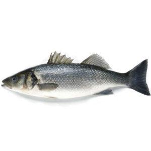 Пресен Лаврак от Balkan Fish