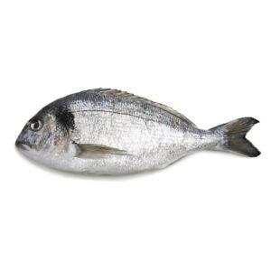 Прясна Ципура от Balkan Fish 400-800 гр