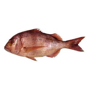 Прясно Фагри Голямо от Balkan Fish 1.5кг+