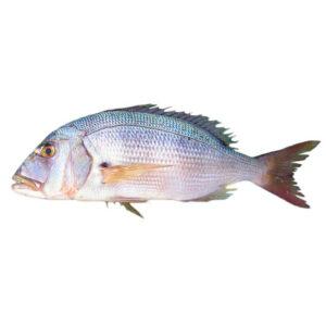 Прясна Синегрида от Balkan Fish 1кг